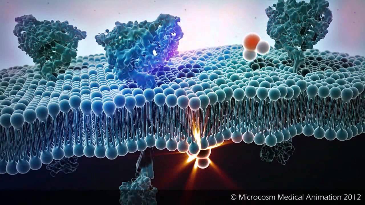 Medical Animation : Bilipid Layer Diffusion Medical