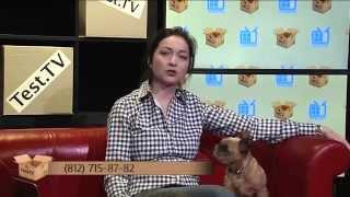 """Запись прямого эфира Test.TV """"Кавказкие овчарки"""""""