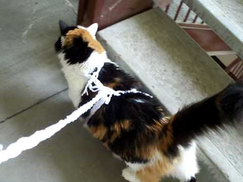 Homemade Cat Walking Leash - YouTube