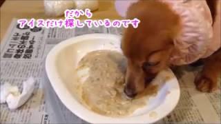 http://tubumari.blog19.fc2.com/ ナナさんの偏食っぷりは筋金入りです...