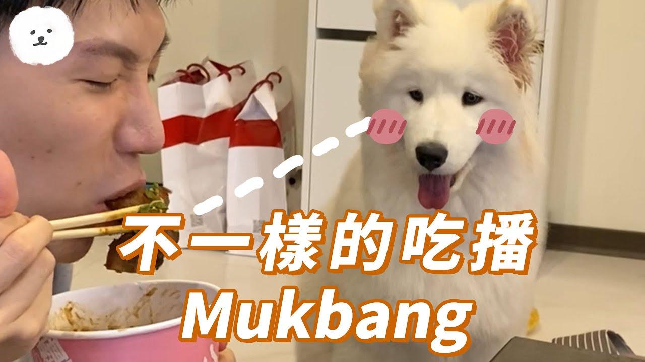 【南瓜PUMPKIN】狗狗不一樣的吃播?!(薩摩耶Samoyed)