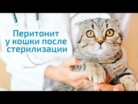 Перитонит у кошки после стерилизации