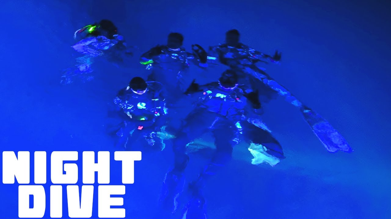 DIVING at NIGHT ! Octopus, Squid , Sea Turtles and more!