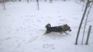 Как правильно выгуливать собак (часть 3)
