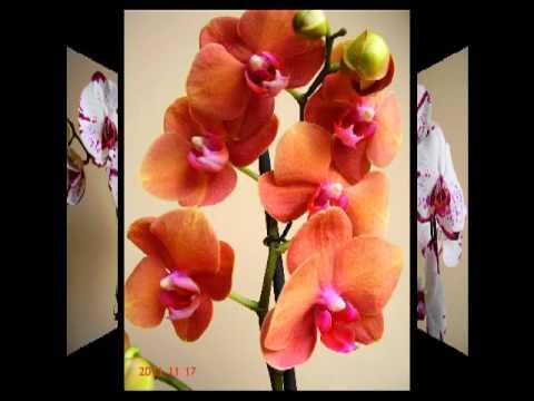 Картинки орхидей, изысканные фотографии цветов орхидеи