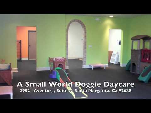 A Small World Doggie Daycare In Rancho Santa Margarita Ca