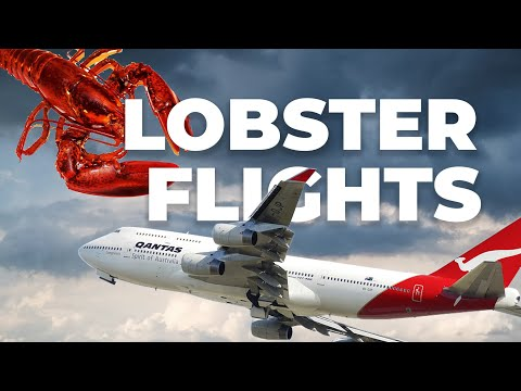 Australia To Operate Lobster Flights To Save $800M Of Seafood