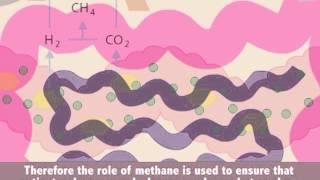 gastroch4eck gastrolyzer breath hydrogen h2 and methane ch4 monitor
