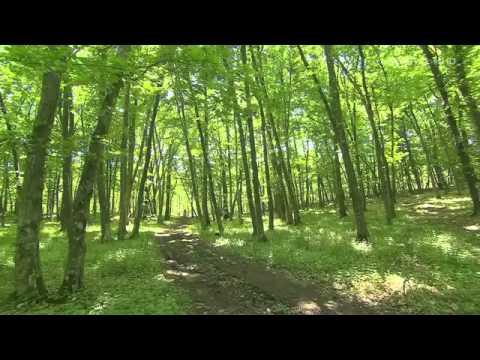 Wild Carpathia - Documentar Travel Channel despre Romania (Full HD)