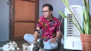 Kucing American Curl Liputan IPOP NET TV 29 Desember 2020