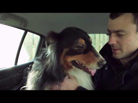 Az ADAPTIL segített Ever kutyának megbirkózni az autózás okozta félelmével