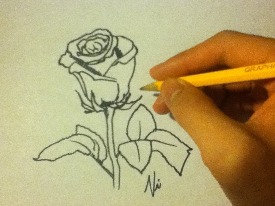 How to draw a rose easyon paperfor beginnersan open rosestep by youtube premium mightylinksfo