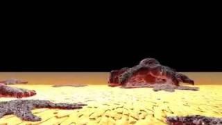 Osteoblast Animation
