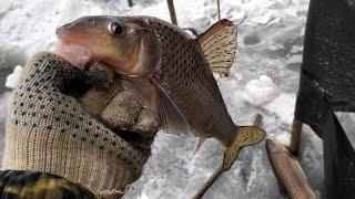 Зимняя рыбалка на амуре Разнорыбица Ассорти