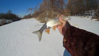 Рыбалка в середине марта на реке Ловля голавлей и плотвы