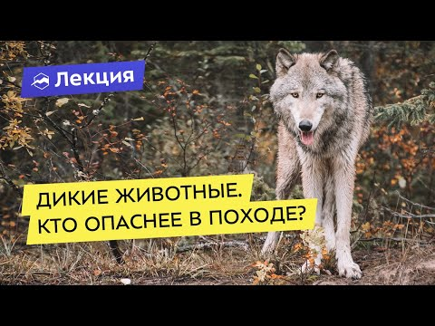Дикие животные: опасные и неопасные