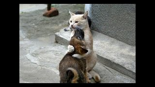 💗Aww - Funny and Cute Animals Compilation 2019💗 #17