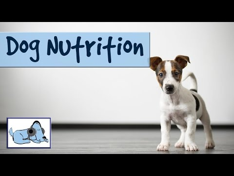 dog-nutrition---tips-on-what-to-and-what-not-to-feed-your-dog/puppy!-🐶-#healthvlog07