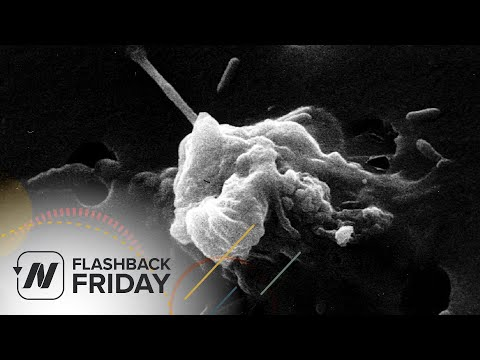 Flashback Friday: Turmeric Curcumin Reprogramming Cancer Cell Death