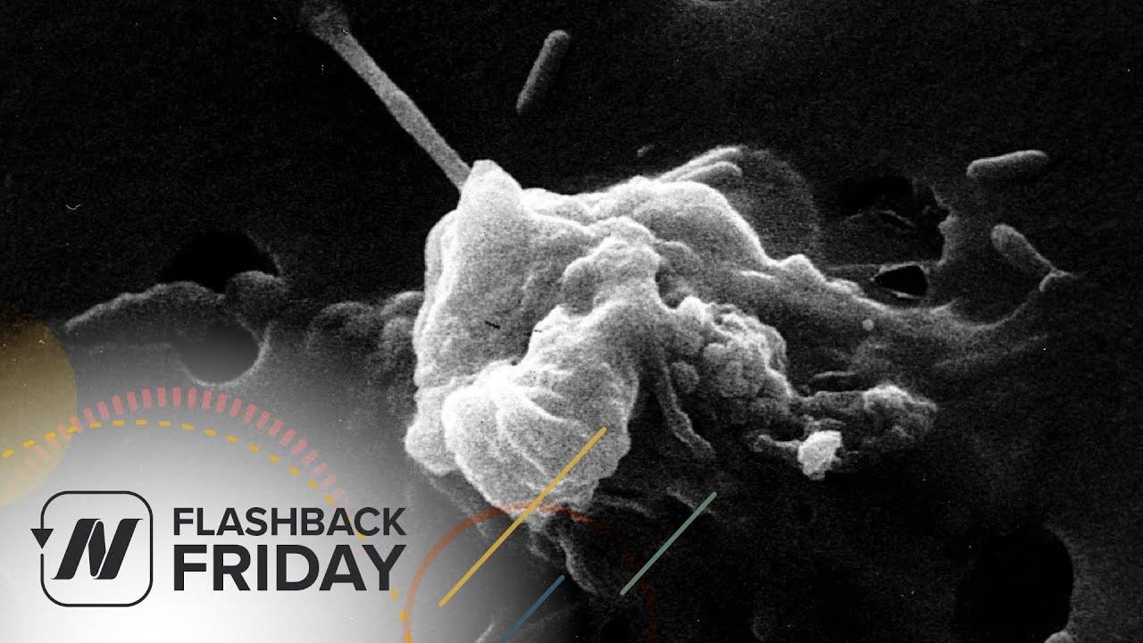 Flashback Friday: Turmeric Curcumin Reprogramming Cancer Cell Death