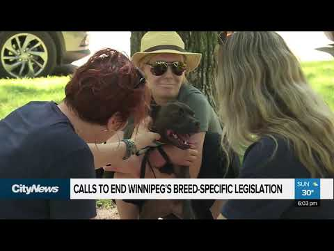 Calls To End Breed-specific Legislation