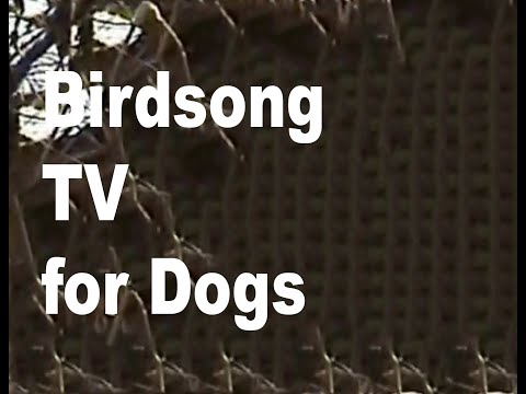 Birdsong TV for Dogs