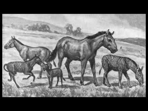 """PLIOCENE PARK — A History of the Hagerman Fossil Beds"" 2016 Documentary"