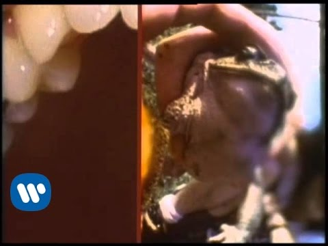 the flaming lips frogs