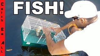 HAMSTER CAGE FISH TRAP Catches Rare Invasive Fish!