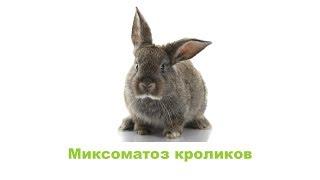 Миксоматоз кроликов. Ветеринарная клиника Био-Вет.