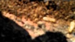 Damp wood Termite exterminators