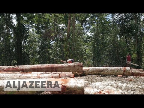 Papua New Guinea's forests are being destroyed 🇵🇬