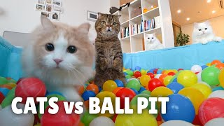 Cats vs Ball Pit