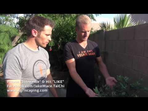 Mind Blowing Trampoline Garden Tour - Gilbert, Arizona