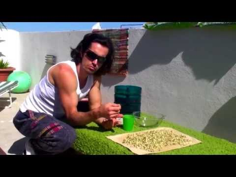Eat Sprout Every Day | Balazs Heller FitYogi Nutrition
