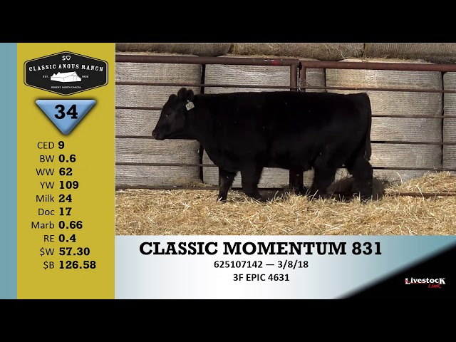 Classic Angus Ranch Lot 34