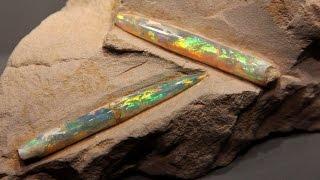 宝石になった生物たち オパール化した古代のイカなど