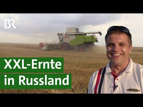 Ernten auf russischen