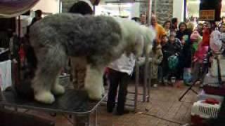 Dogs Kavala Pet Spa