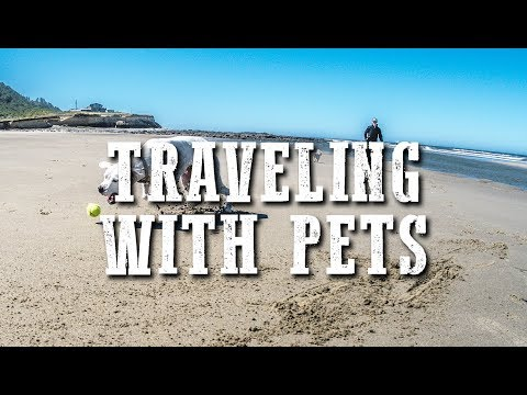 How To RV With Dogs