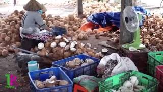 Visiting the Local coconut Factory in Ben Tre Province - TPtravel Vietnam