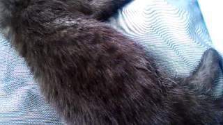 Katze atmet sehr schnell