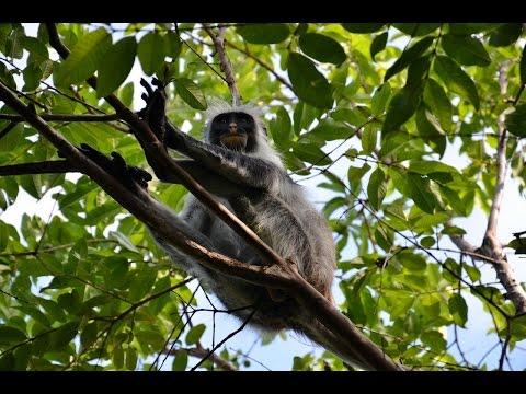 MyWay. Tanzania. Zanzibar. 2014. 02 Nungwi - Jozani Forest - Nungwi
