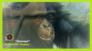 Шимпанзе в зоопарке развлекает гостей