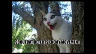 Смешные коты и кошки - видео приколы с кошками #7