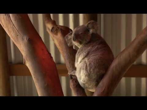 Wild Life at the Zoo Season 1 Episode 7 - The Flying Koala & Seal Training