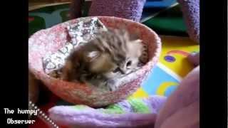 Забавно видео: Super Cute Baby Animals!!!