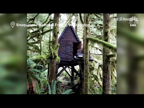 99 Percent Plays! The Forest! (ALL THE NAKED LADIES!) from YouTube · Duration:  25 minutes 5 seconds