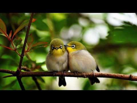 Sweet Love Birds Wallpapers