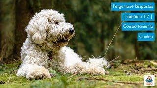 Perguntas e Respostas - Episódio 117 - Comportamento Canino